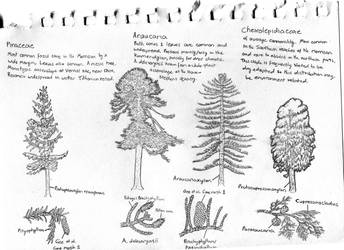 Sketch: Trees of the Morrison by Tomozaurus