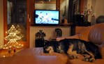 Christmas Eve with Gizmo, Laika and favorite movie by the-first-seer