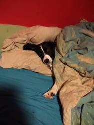 It's sleep time, I think?! by 24silverthehedgehog