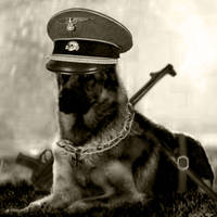SS Dog by bladeofhonor2011