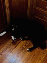 Demon dog  by WolfiezSlasher