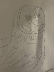 Owl Spark by WolfiezSlasher