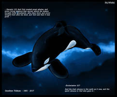 Goodbye Tilikum 1981 - 2017 by Sky-Whales