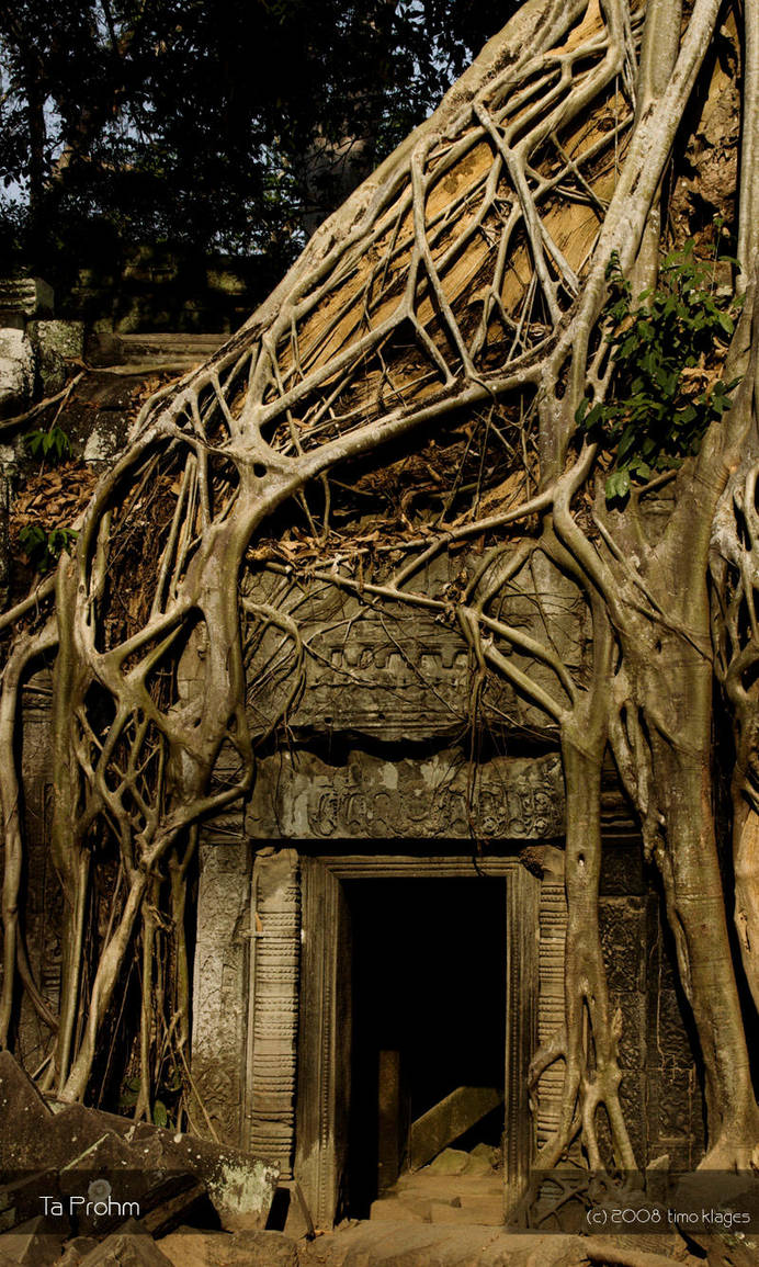 Ta Prohm by tK78