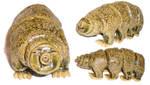 Bread-Loaf-Sized Tardigrade by aberrantceramics