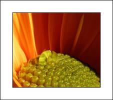Drop in the sunlight by Eruwyn