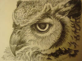 owl by It-samia