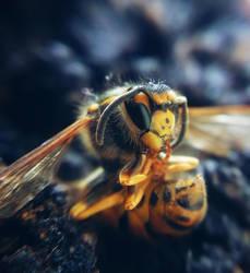 Hornet by M-A-R-I-A-N