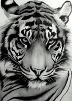 Sumatran Tiger by artistelllie