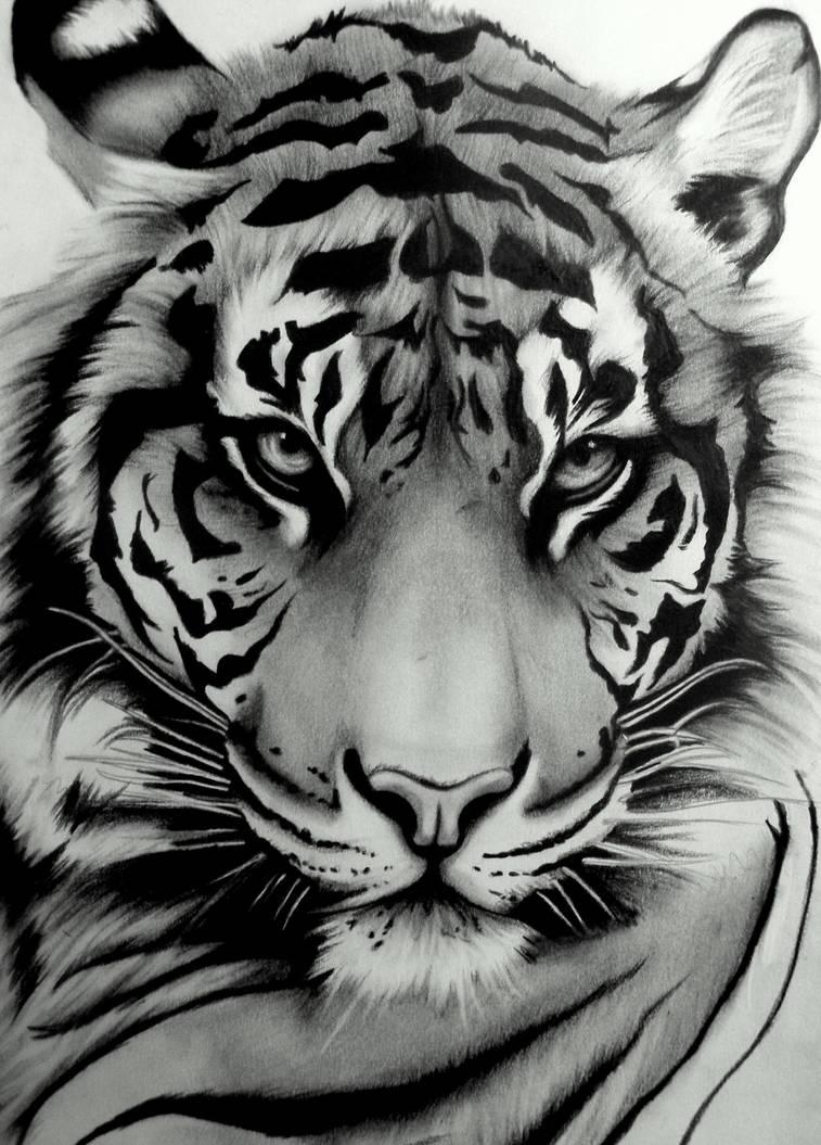 white tiger tattoos - 735×1025
