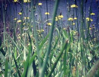Grass by Meskarune
