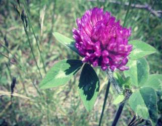 Purpleclover by Meskarune