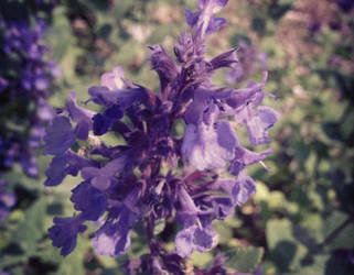 Purpleflower by Meskarune