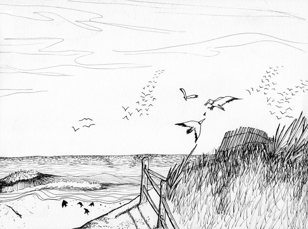 Beach-birds by Meskarune