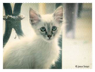 El Gato Blanco by zkratsh
