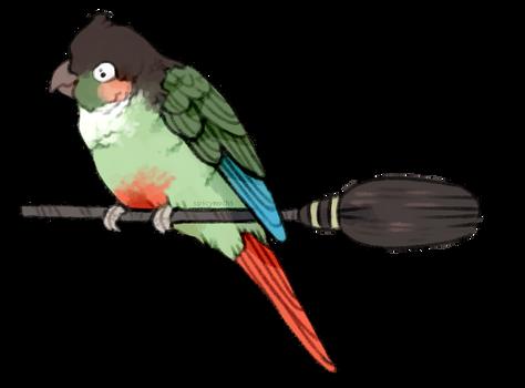 bird witch by supichu