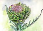artichoke flower by JoeMacGown