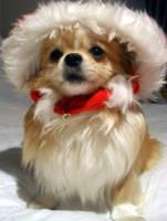 Christmas Honey 1 by misshoneywoo