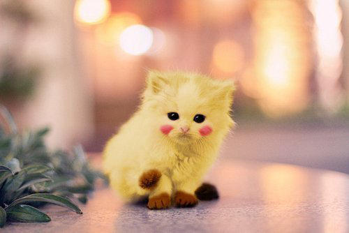 pikachu kitty by zola159 on deviantart