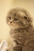 Kitty-kitty 4 by Y0zhik