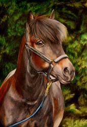 Pony by Kkulkutauti
