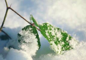 winter by cloe-may