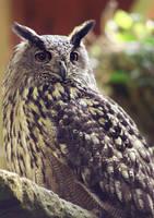 eagle owl by cloe-may