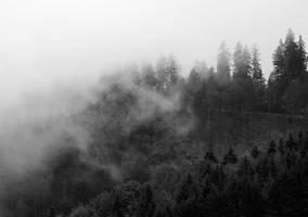 misty trees by cloe-may