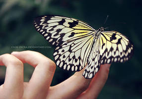 butterfly 4 by cloe-may