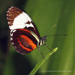 butterfly 7 by cloe-may