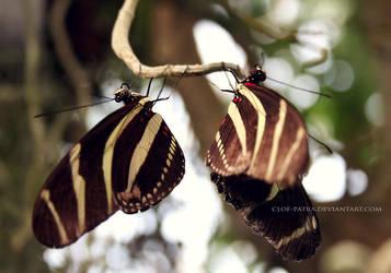 butterflies by cloe-may