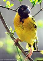 bird by cloe-may