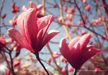 magnolia by cloe-may