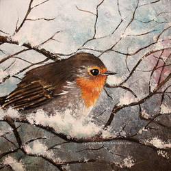robin by cloe-may