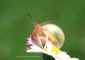 snail+daisy3 by cloe-may