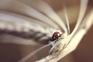 week 34: ladybug highway by cloe-may