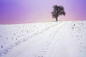 winter wonderland by cloe-may