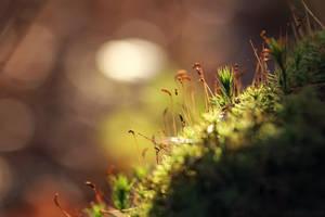 moss by cloe-may
