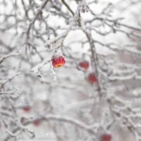 22.34 suddenly winter by cloe-may