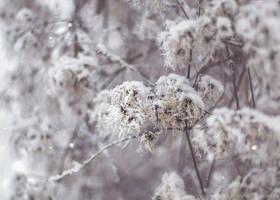 22.39 snowy by cloe-may