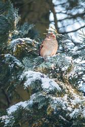 winter sparrow by cloe-may