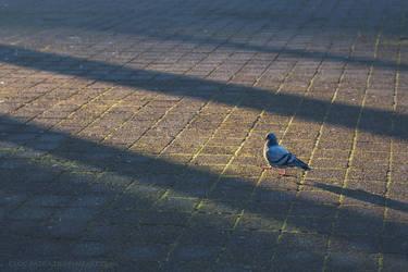 23.8 jumping shadows by cloe-may