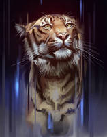 Tiger Study by TehChan