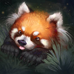 Red Panda by TehChan