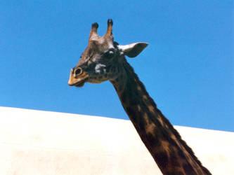 'Giraffe' by TADASHI-STATION