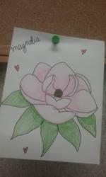 Magnolia flower by heartofthewarrior13