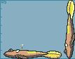 Stunfisk by Hyper-Stan