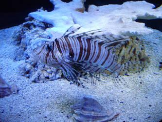 Lionfish - Virginia Trip by tehdarkling
