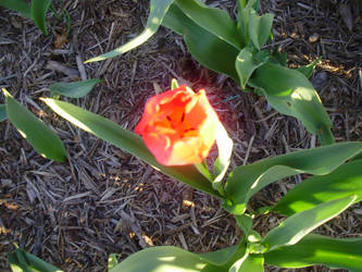 Bright Flower of Mine by tehdarkling