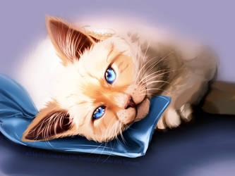 kitty practise painting by TemeroHimitaki